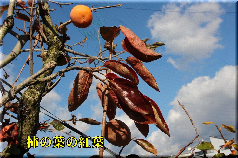 1kaki191129_003.jpg