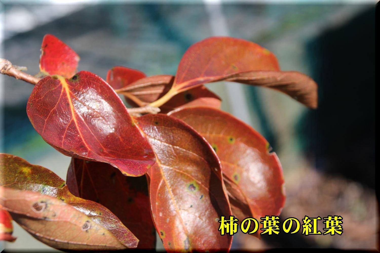 1kaki191129_004.jpg
