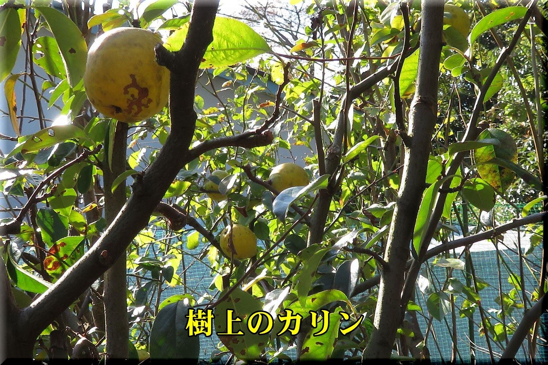 1karin191115_006.jpg