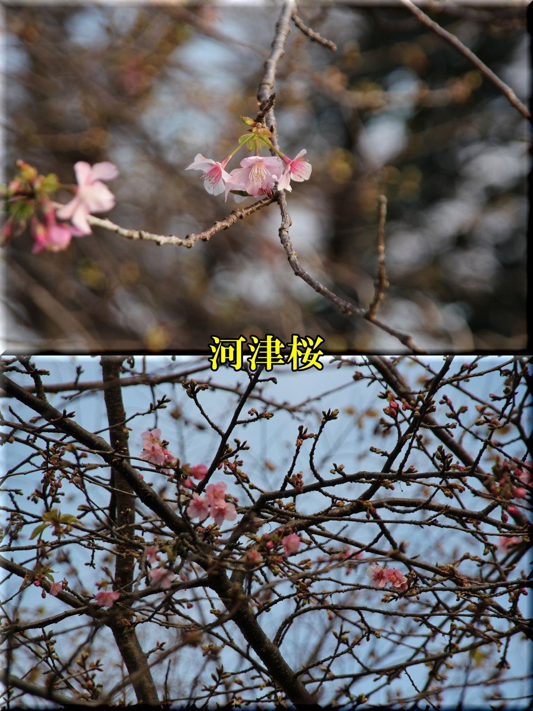 1kawadu200124_042.jpg