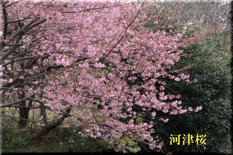 1kawadu200214_036.jpg