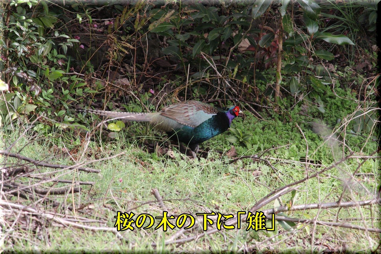 1kiji200220_024.jpg