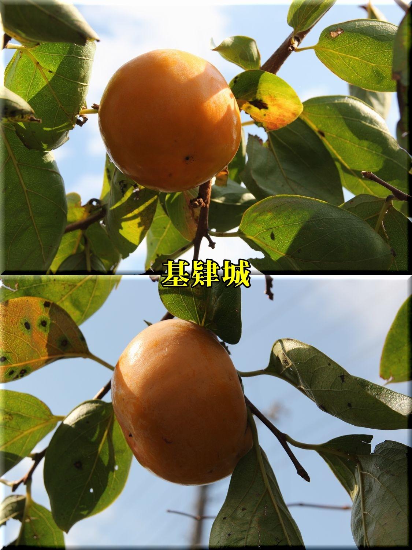 1kijyou191104_008.jpg