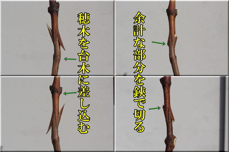 1kuratugi200214_014.jpg