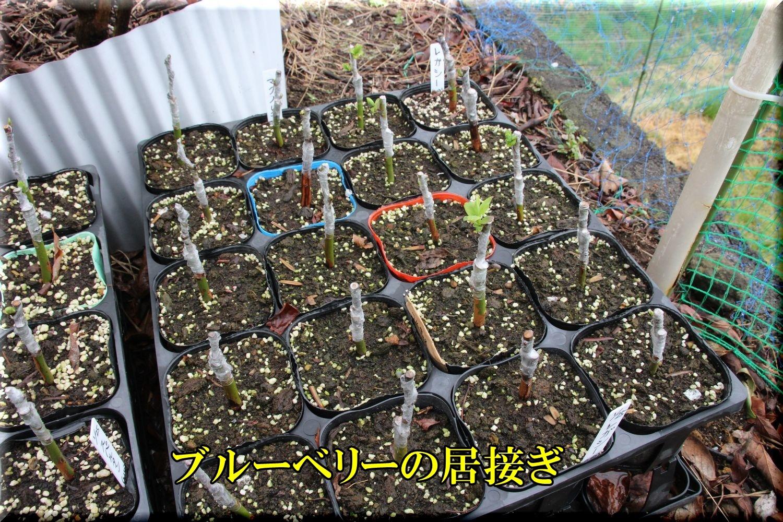 1lega_mag200328_027.jpg