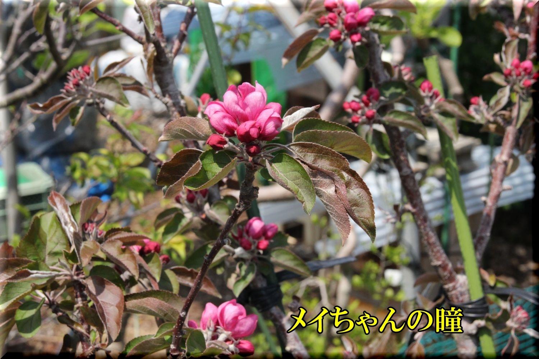 1meichan200416_082.jpg