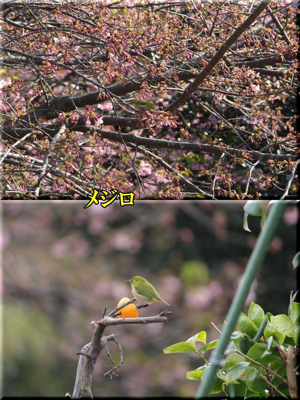 1mejiro200208_041.jpg