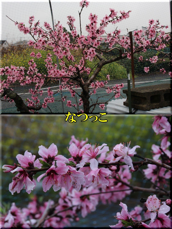 1natukko200328_051.jpg