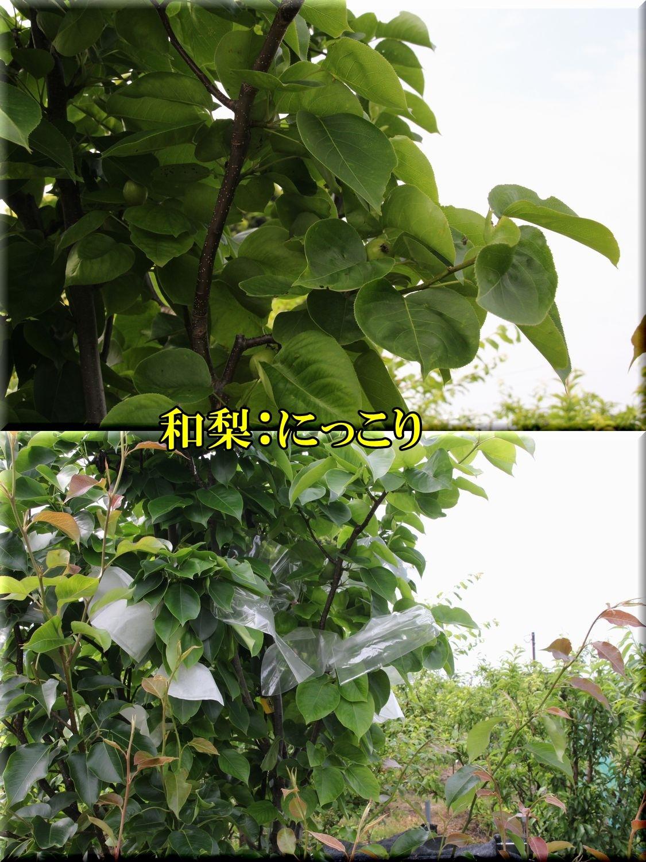 1nikkori200518_011.jpg