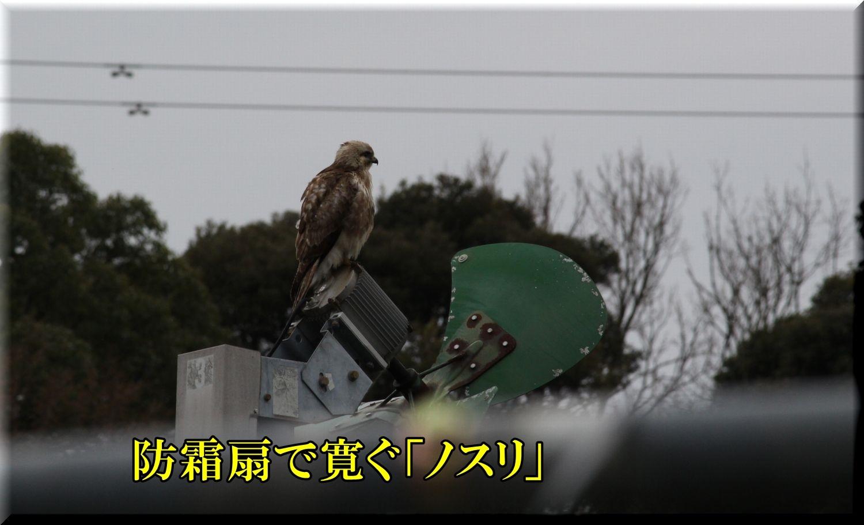 1nosuri200225_002.jpg