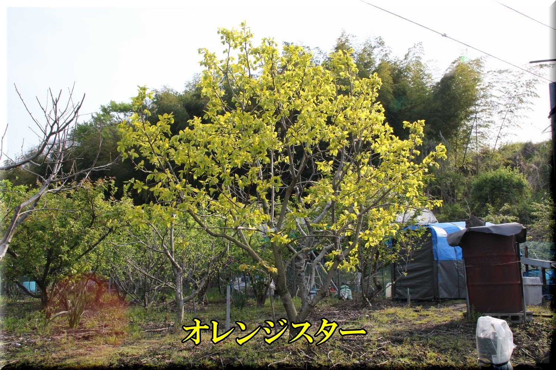 1orenjiS200416.jpg