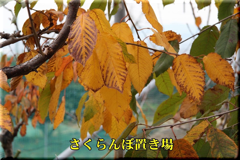 1outou191222_001.jpg