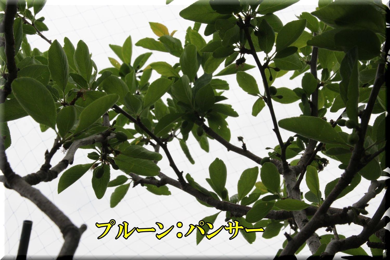 1panser200503_080.jpg