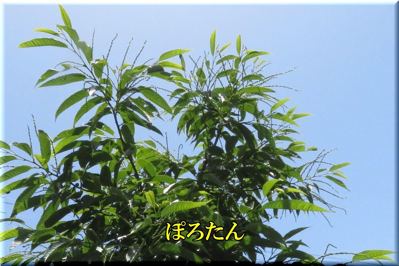 1polotan200524_062.jpg