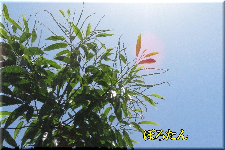 1polotan200524_069.jpg