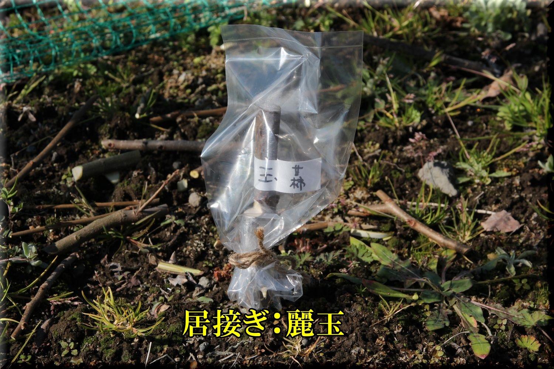 1reigyoku200205_030.jpg