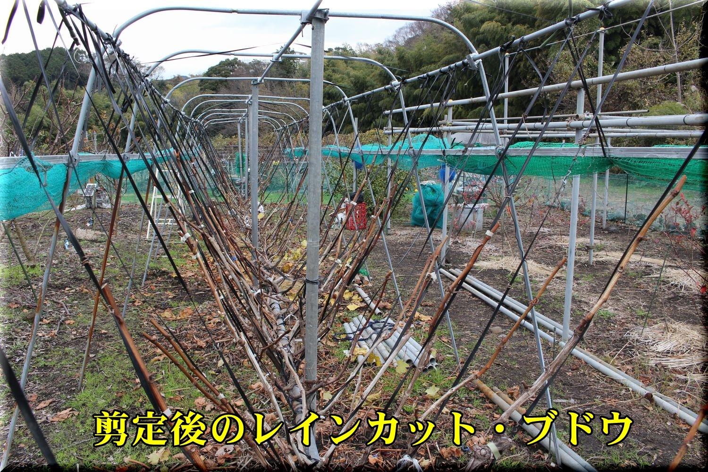 1senteigo191225_022.jpg