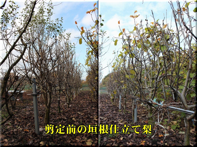 1senteimae191224_004.jpg