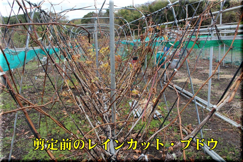 1senteimae191225_008.jpg