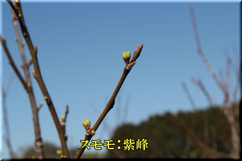 1sihou200224_009.jpg