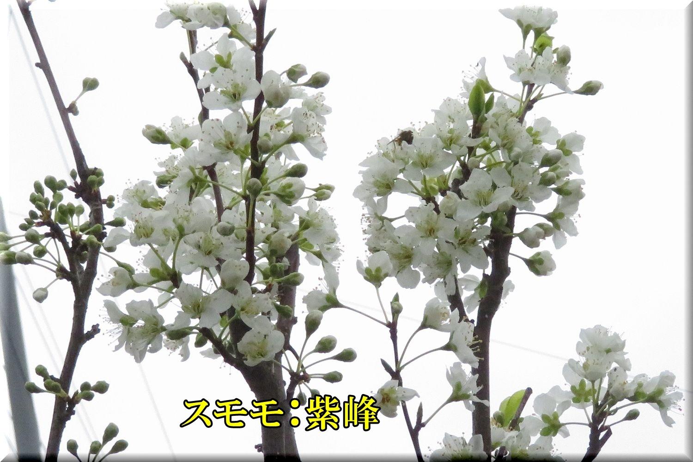 1sihou200310_063.jpg