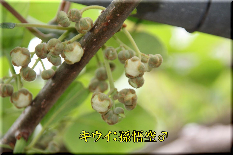 1songoku200506_029.jpg