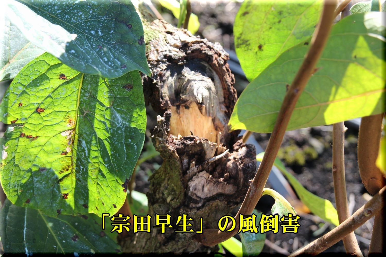1soudawase191013_019.jpg