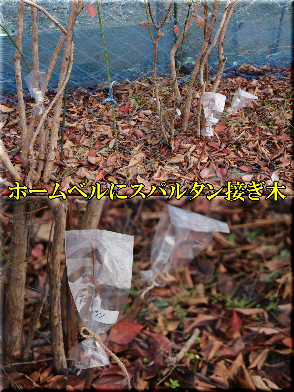 1spartan200124_030.jpg