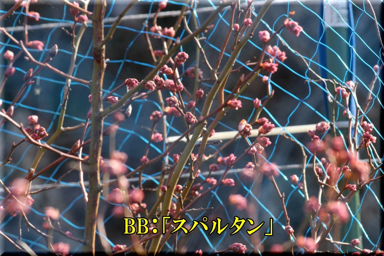 1spartan200229_026.jpg
