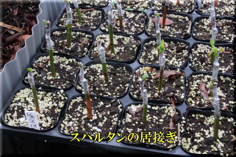 1spartan200328_010.jpg