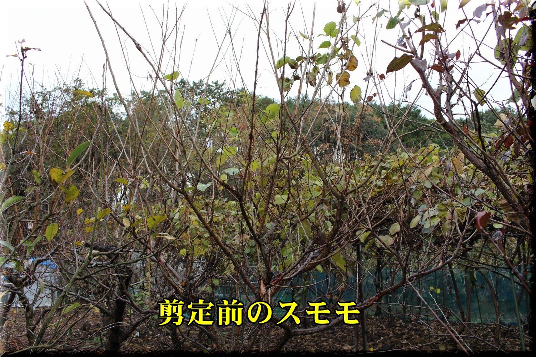 1sumomo191227_013.jpg