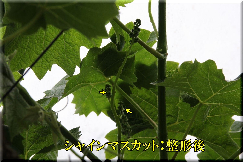 1syainM200509_039.jpg