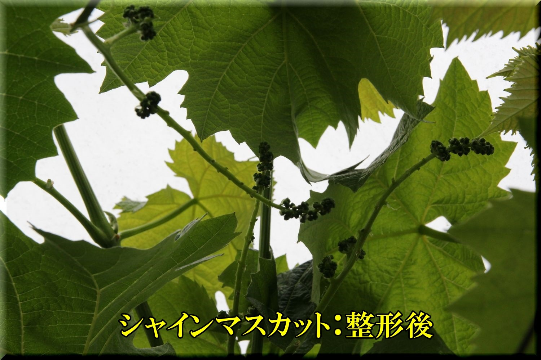 1syainM200509_040.jpg