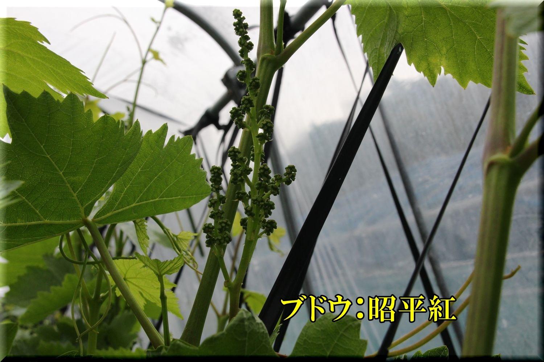1syouhei200506_070.jpg