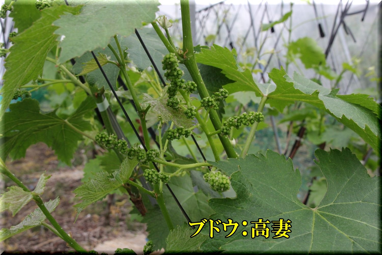 1takatuma200506_060.jpg