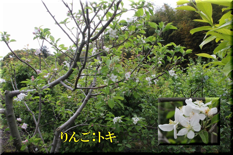 1toki200506_003.jpg