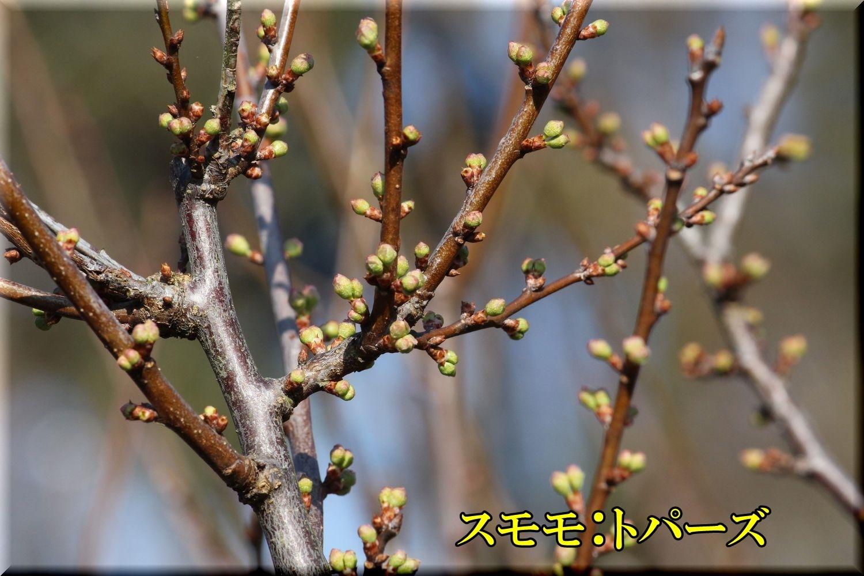 1topars200229_014.jpg