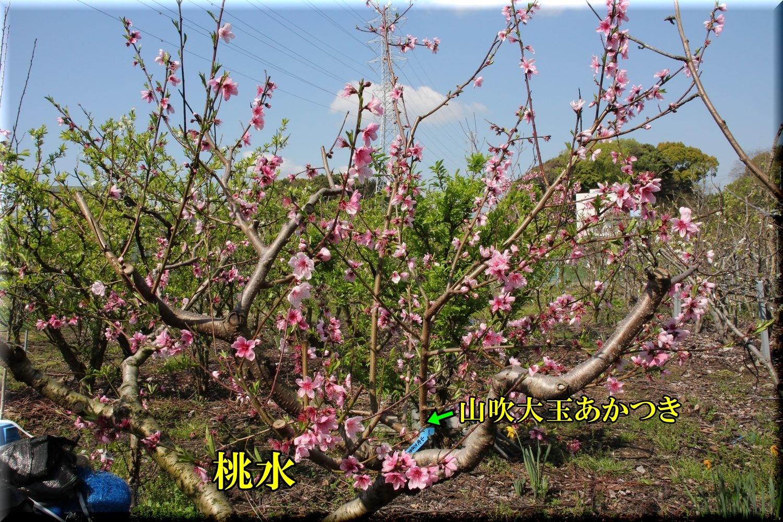 1tousui200406_061.jpg