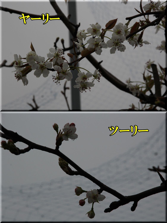 1yar_tury200328_063.jpg
