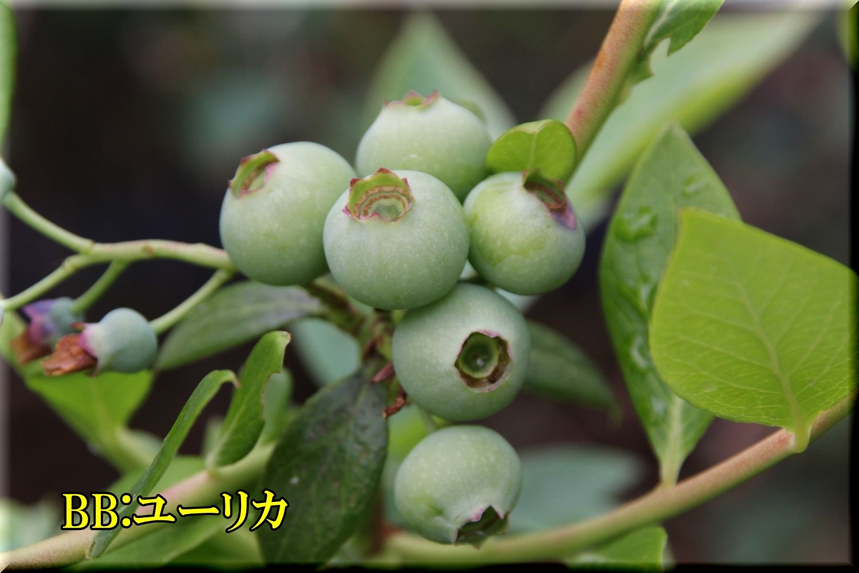 1yurika200503_001.jpg