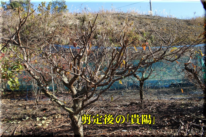 2kiyou191227_025.jpg