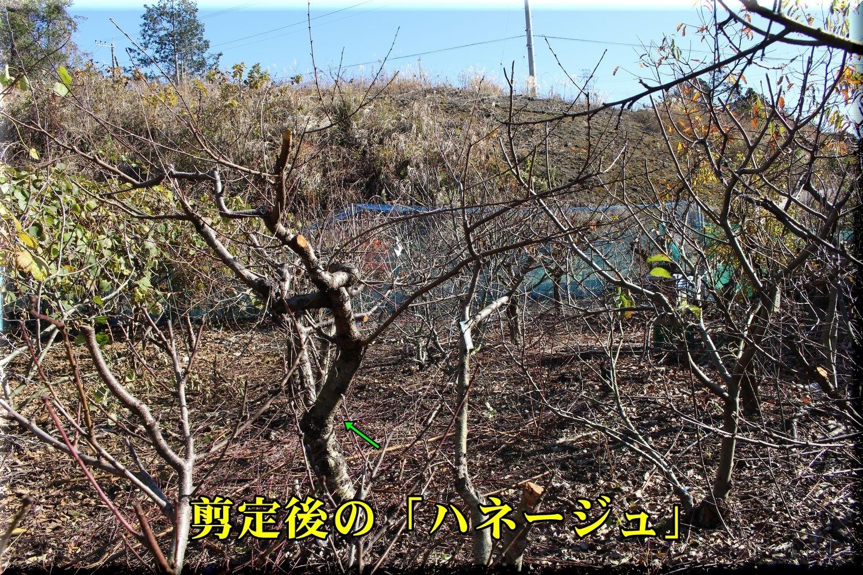2nekuta_go191227_020.jpg