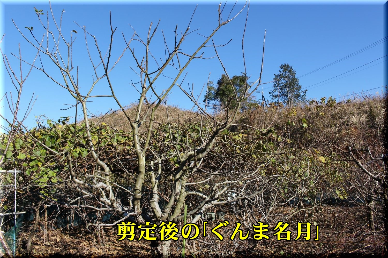 2ringo_g191227_055.jpg