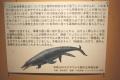 モササウルス和歌山