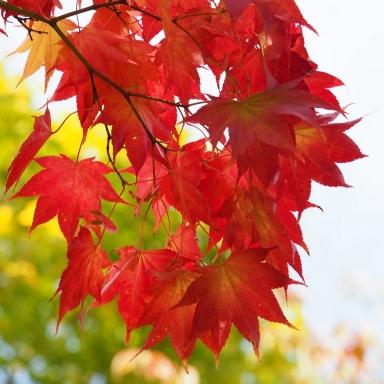 f-真駒内公園の紅葉-2019-10-14-M1140032