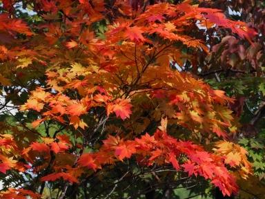 f-真駒内公園の紅葉-2019-10-14-M1140012
