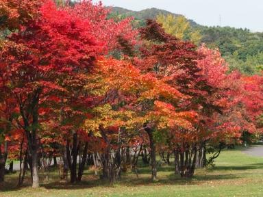 f-真駒内公園の紅葉-2019-10-14-M1140028
