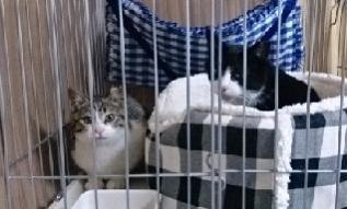 cats@20200311001.jpg