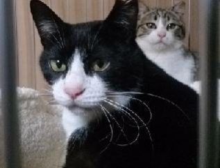 cats@20200311003.jpg