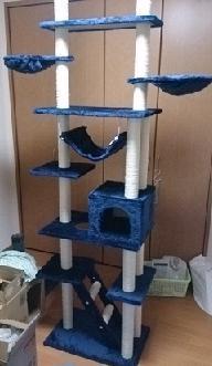 cats@202003150002.jpg